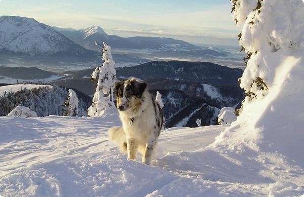 Leja im Schnee